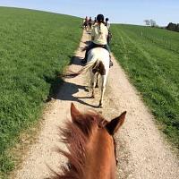UConn Summer Horse Riding Lessons