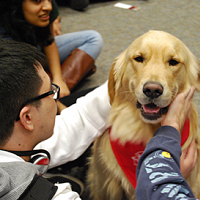 Paws to Relax @ HBL