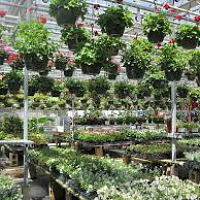 Bedding Plant Program for Greenhouse Growers