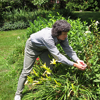 UConn Advanced Master Gardeners- Landscaping with Natives