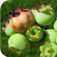 UConn Advanced Master Gardeners- DIY Plant Breeding
