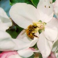 UConn Advanced Master Gardeners- Pollinator Gardening